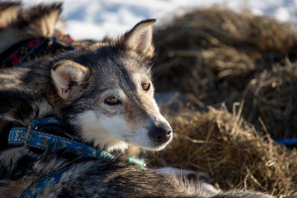 IditarodDay2-007.jpg