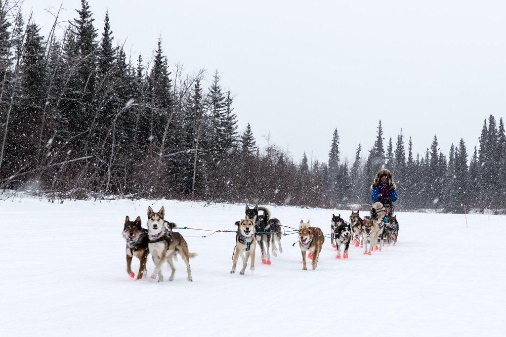 IditarodNikolai020.jpg